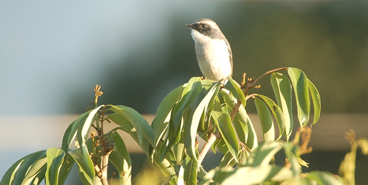 Bird Watching Tours in Nepal