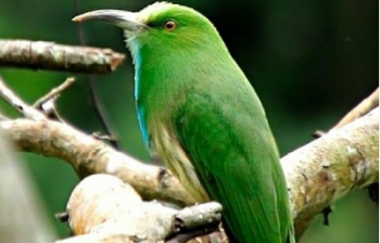 Bird Watching Trip in Nepal - Nepal Bird Watching Tour